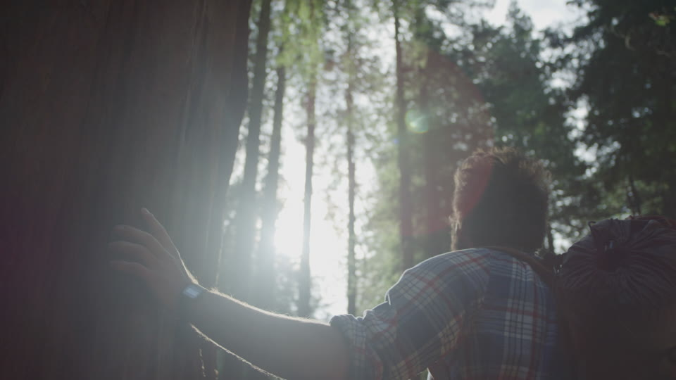 Get 5K premium stock footage video clip - Hiker In The Woods - shot on RED Camera. Available immediately in RED R3D format. Choose from a wide range of footage collections with clips that belong together. One simple license for any use. New collections added weekly. ID 1208. Download footage now!