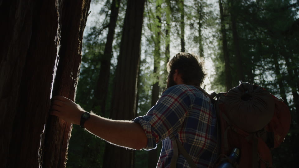 Get 5K premium stock footage video clip - Hiker In The Woods - shot on RED Camera. Available immediately in RED R3D format. Choose from a wide range of footage collections with clips that belong together. One simple license for any use. New collections added weekly. ID 1220. Download footage now!