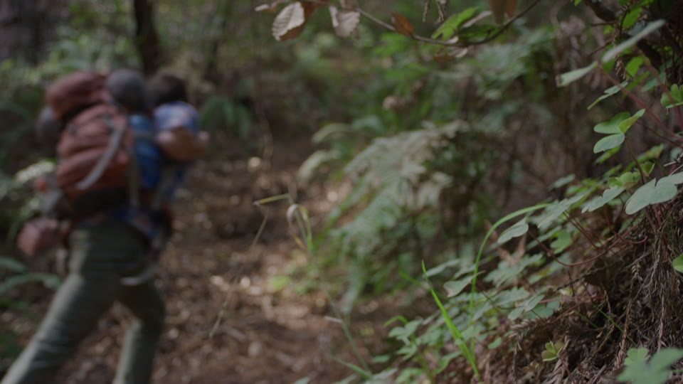 Get 5K premium stock footage video clip - Hiker In The Woods - shot on RED Camera. Available immediately in RED R3D format. Choose from a wide range of footage collections with clips that belong together. One simple license for any use. New collections added weekly. ID 1221. Download footage now!