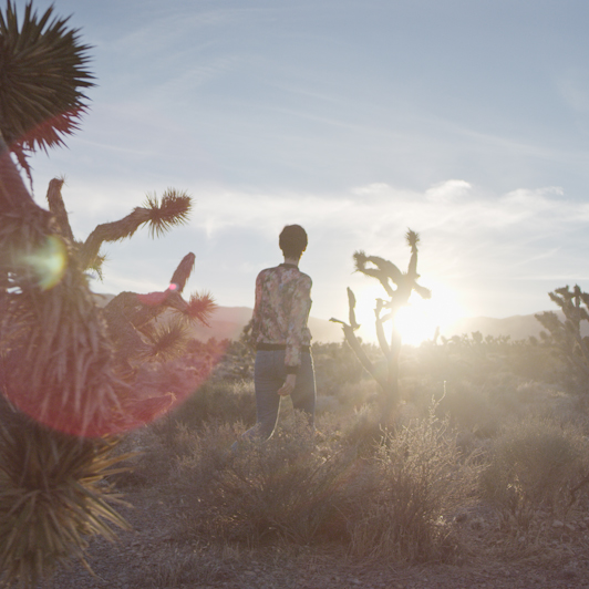 8K premium royalty-free stock footage shot on RED Camera, instantly available in RED R3D format. License this collection of Strength of a Cactus now!