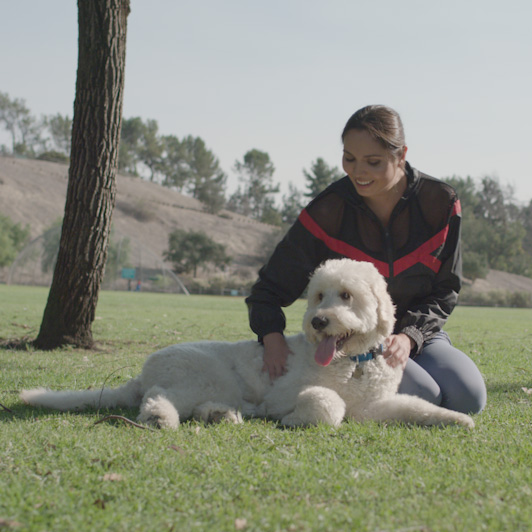 8K premium royalty-free stock footage shot on RED Camera, instantly available in RED R3D format. License this collection of Playing With Dog now!