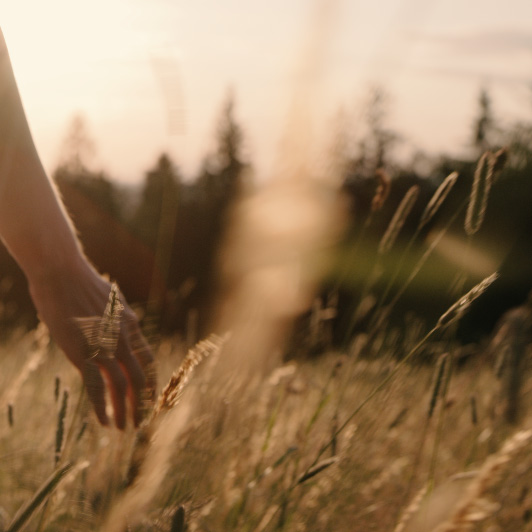 8K premium royalty-free stock footage shot on RED Camera, instantly available in RED R3D format. License this collection of Girl On The Mountain Path now!