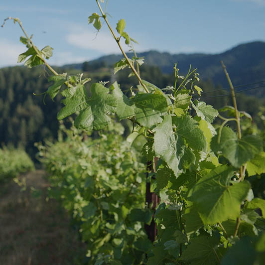 8K premium royalty-free stock footage shot on RED Camera, instantly available in RED R3D format. License this collection of Winery B-roll now!