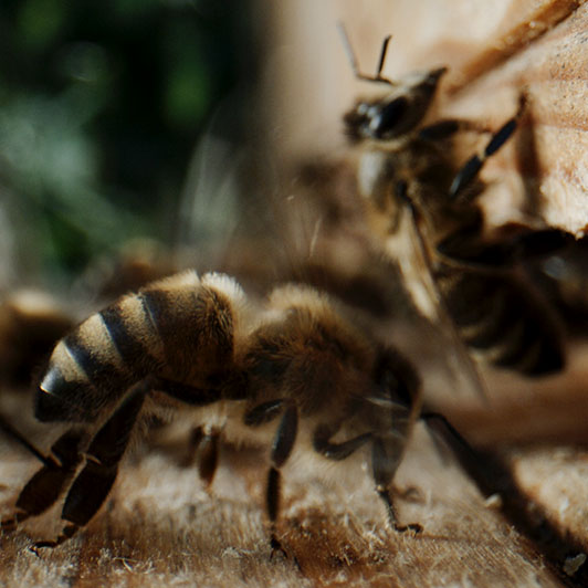 8K premium royalty-free stock footage shot on RED Camera, instantly available in RED R3D format. License this collection of Beekeeper now!